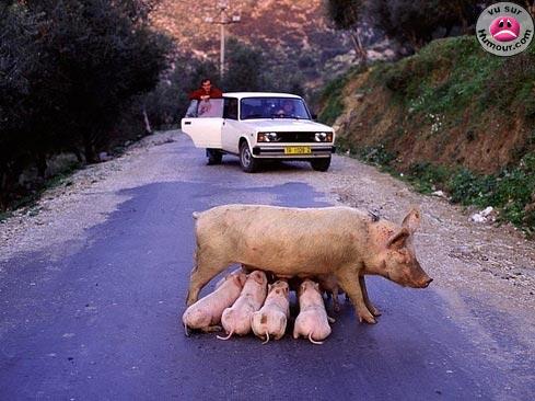 http://lancien.cowblog.fr/images/Animaux1/00035262.jpg