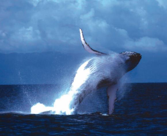 http://lancien.cowblog.fr/images/Animaux1/baleine.jpg