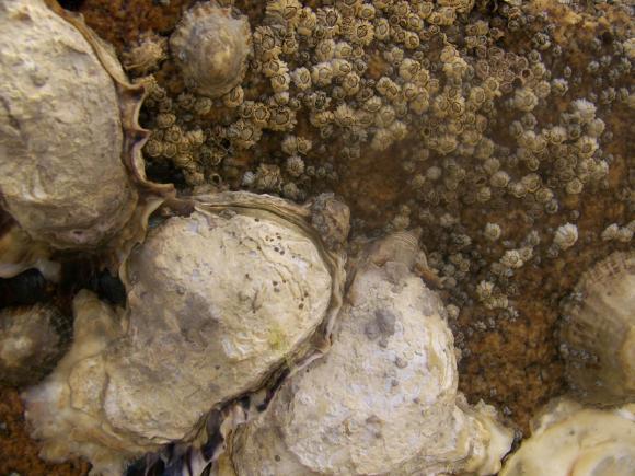 http://lancien.cowblog.fr/images/Animaux2/1002161.jpg
