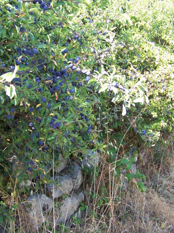 http://lancien.cowblog.fr/images/Animaux2/1002247.jpg