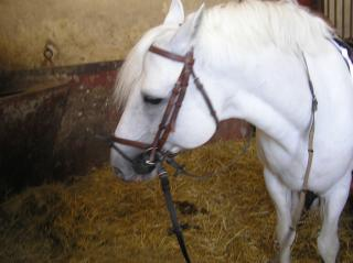 http://lancien.cowblog.fr/images/Animaux2/P8220329.jpg