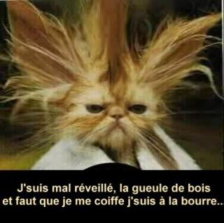 http://lancien.cowblog.fr/images/Animaux2/articleimageashx.jpg