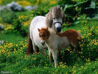 http://lancien.cowblog.fr/images/Animaux2/cheval2.jpg