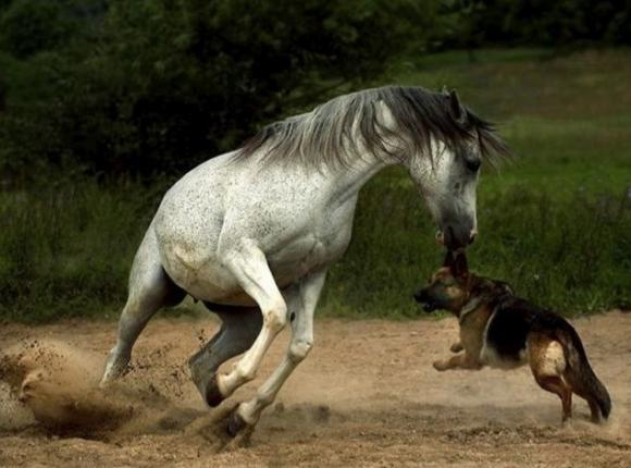 http://lancien.cowblog.fr/images/Animaux2/chiencheval.jpg