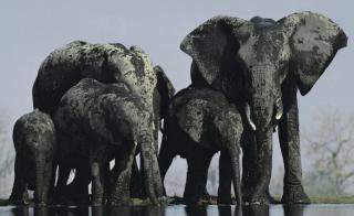 http://lancien.cowblog.fr/images/Animaux2/elephant.jpg