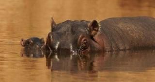 http://lancien.cowblog.fr/images/Animaux2/hippopotame.jpg
