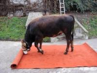 http://lancien.cowblog.fr/images/Animaux2/vache2.jpg