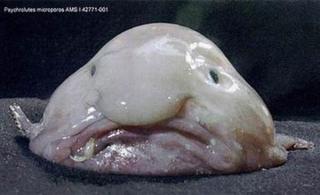 http://lancien.cowblog.fr/images/Animaux4/blowfish.jpg