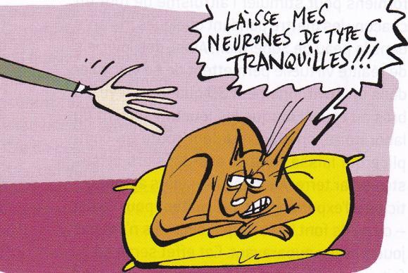 http://lancien.cowblog.fr/images/Animaux4/chatcaresse.jpg