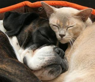 http://lancien.cowblog.fr/images/Animaux4/siestechienchatdormir.jpg