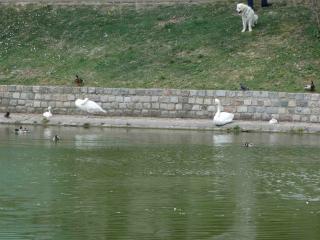http://lancien.cowblog.fr/images/Animaux5/DSC05264-copie-1.jpg