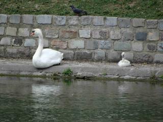 http://lancien.cowblog.fr/images/Animaux5/DSC05265.jpg