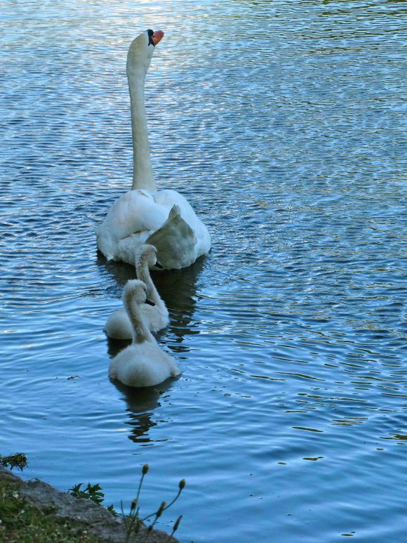 http://lancien.cowblog.fr/images/Animaux5/DSC05343.jpg