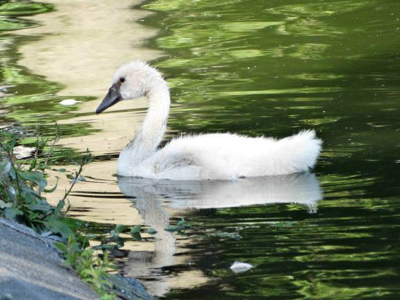 http://lancien.cowblog.fr/images/Animaux5/DSC05347-copie-2.jpg