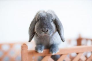 http://lancien.cowblog.fr/images/Animaux5/phpDaB3Dy.jpg