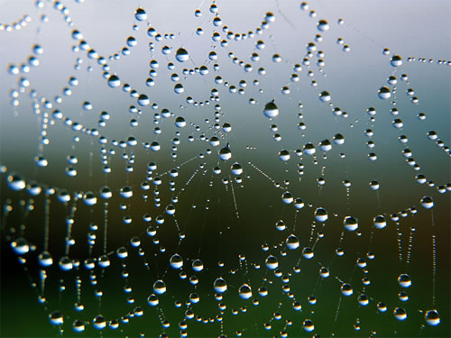 http://lancien.cowblog.fr/images/Animaux5/spinnennetz.jpg