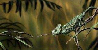 http://lancien.cowblog.fr/images/Animaux6/Chameleon038-copie-1.jpg