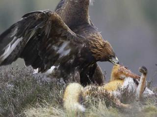 http://lancien.cowblog.fr/images/Animaux6/Naturesanspitie019.jpg