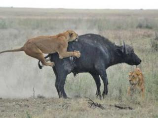 http://lancien.cowblog.fr/images/Animaux6/Naturesanspitie027.jpg