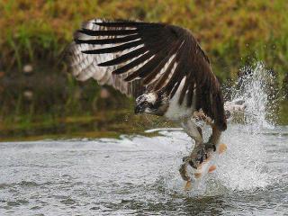http://lancien.cowblog.fr/images/Animaux6/Naturesanspitie033.jpg