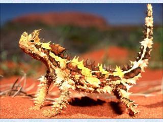 http://lancien.cowblog.fr/images/Animaux6/dragonepineux2.jpg