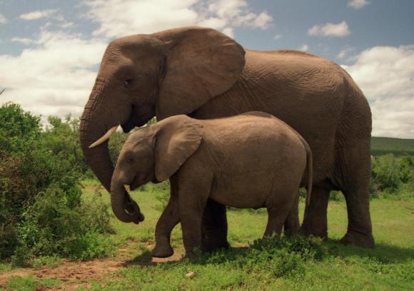 http://lancien.cowblog.fr/images/Animaux6/elephants.jpg