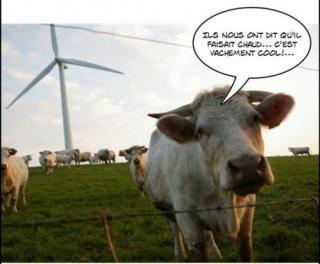 http://lancien.cowblog.fr/images/Caricatures1/caricaturevaches.jpg