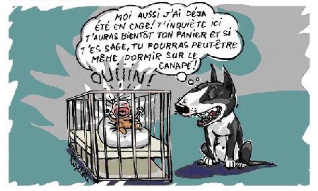 http://lancien.cowblog.fr/images/Caricatures3/enfantchien3.jpg