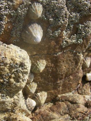 http://lancien.cowblog.fr/images/CarnacPlessis/1002174.jpg
