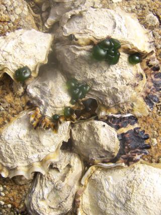 http://lancien.cowblog.fr/images/CarnacPlessis/1002183.jpg