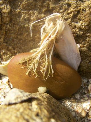 http://lancien.cowblog.fr/images/CarnacPlessis/1002184.jpg