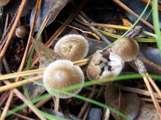 http://lancien.cowblog.fr/images/CarnacPlessis/1002855.jpg