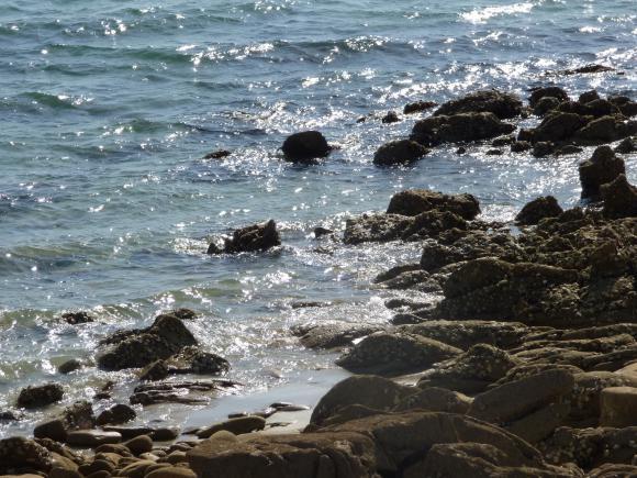http://lancien.cowblog.fr/images/CarnacPlessis/P1000822.jpg