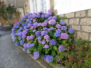 http://lancien.cowblog.fr/images/CarnacPlessis/fleur1.jpg