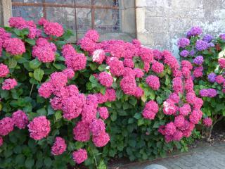 http://lancien.cowblog.fr/images/CarnacPlessis/fleurs3.jpg