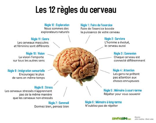 http://lancien.cowblog.fr/images/Cerveau1/12reglescerveaupetit1.jpg