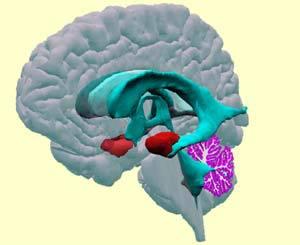 http://lancien.cowblog.fr/images/Cerveau1/2590352.jpg
