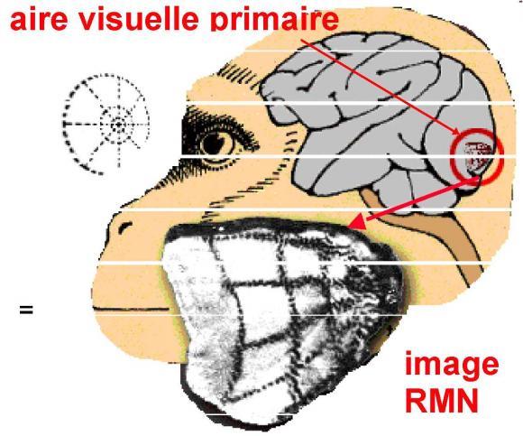 http://lancien.cowblog.fr/images/Cerveau1/3675530.jpg
