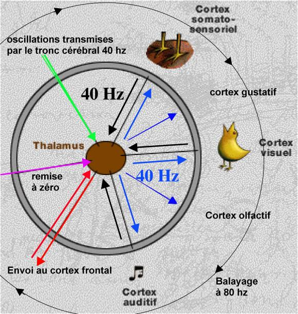http://lancien.cowblog.fr/images/Cerveau1/4059375.jpg