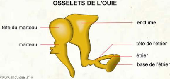http://lancien.cowblog.fr/images/Cerveau1/4298156.jpg