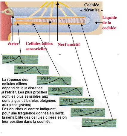 http://lancien.cowblog.fr/images/Cerveau1/4298159.jpg