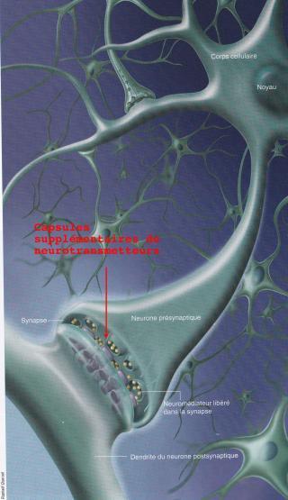 http://lancien.cowblog.fr/images/Cerveau1/capsules.jpg