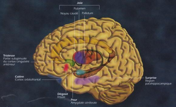 http://lancien.cowblog.fr/images/Cerveau1/cerveauemotions1.jpg