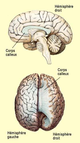 http://lancien.cowblog.fr/images/Cerveau2/a12crcon1b.jpg