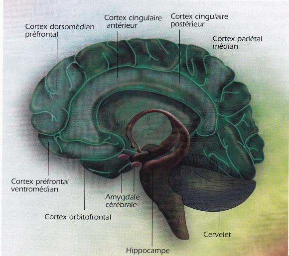 http://lancien.cowblog.fr/images/Cerveau2/cerveauconsciencemoi.jpg