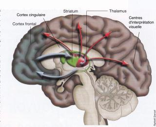 http://lancien.cowblog.fr/images/Cerveau2/cerveauhallucinations.jpg