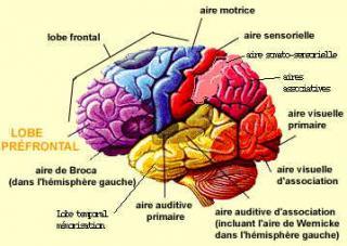 http://lancien.cowblog.fr/images/Cerveau2/cerveaumemoire.jpg