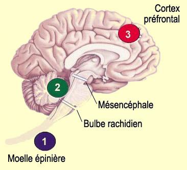http://lancien.cowblog.fr/images/Cerveau2/d03cldou2a.jpg