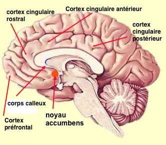 http://lancien.cowblog.fr/images/Cerveau2/detectionerreur-copie-1.jpg