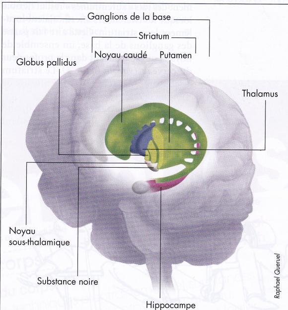 http://lancien.cowblog.fr/images/Cerveau2/habitudes.jpg